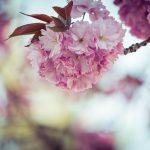 【番組で巡った『桜』のスポットはどこ?】夜の巷を徘徊する「今年は満開の桜めぐり」 2018/4/19・26深夜放送